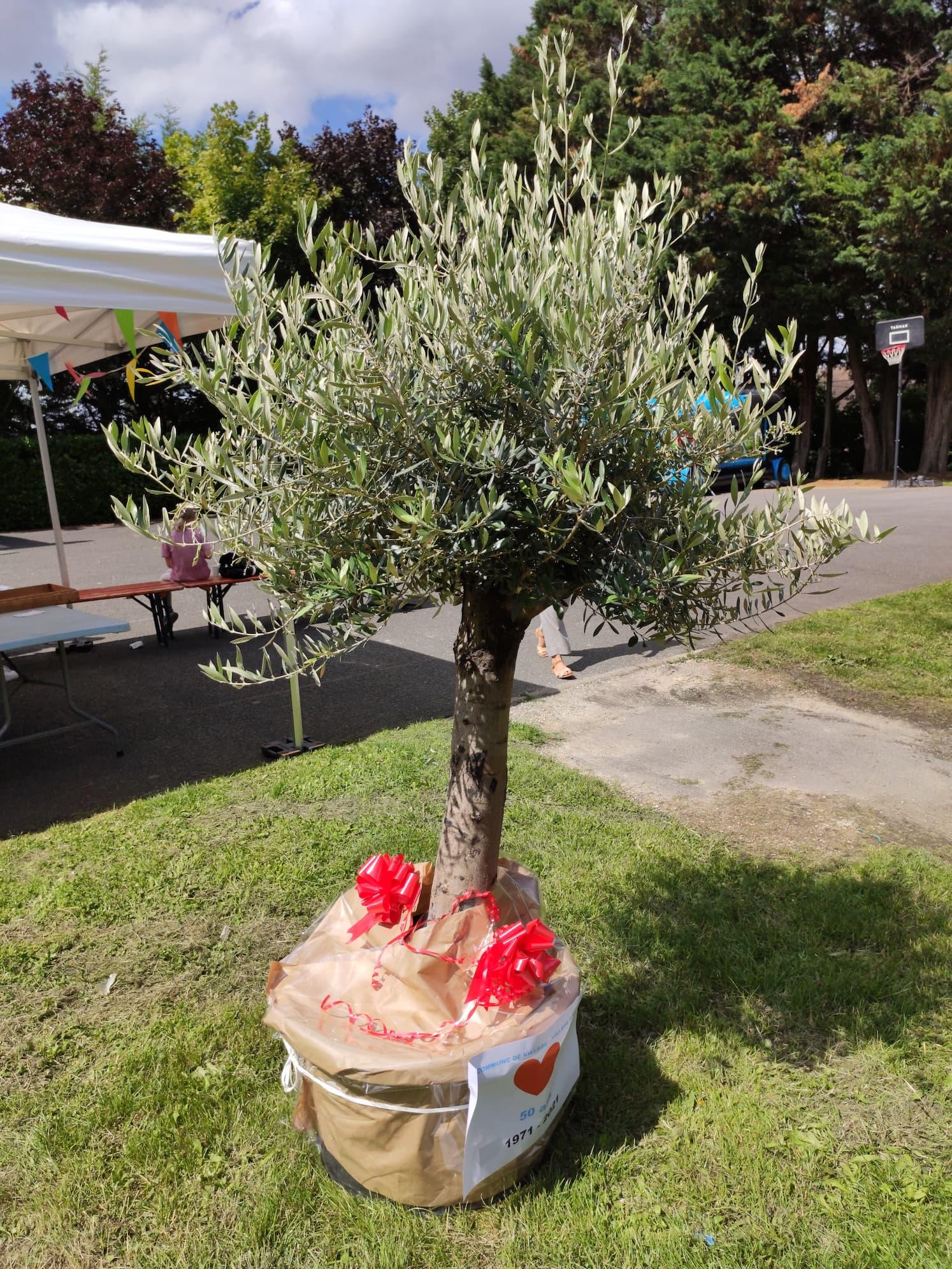 L'olivier offert par la mairie de Villabé